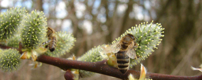 Včelařské kurzy