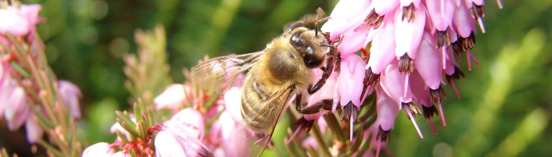 Včelařské kurzy, Miloslav Holas