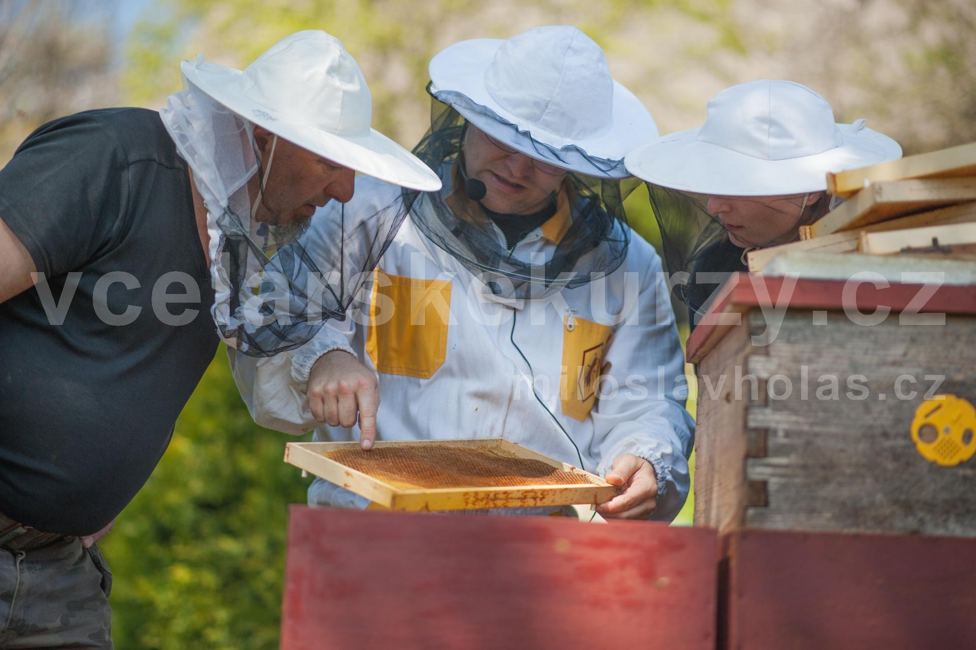 Kontakt se včelami...