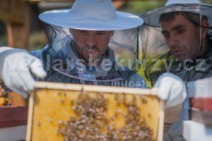 Účastník na akci včelařské kurzy